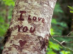 Lo que dicen del amor